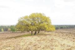 planken wambuis#(20200425) landschappen