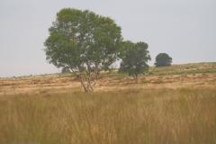 edese heide#(20210803)b landschappen