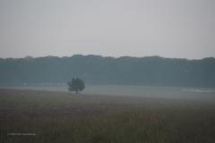 sunrise planken wambuis#07 (20200816)  landschappen