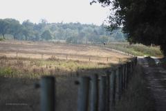 Wijde Veldpad#01 (20200920) landschappen