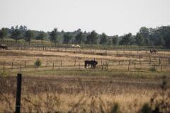 Wijde Veldpad#(20200920)b landschappen