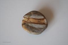 steen#(20200307) diversen