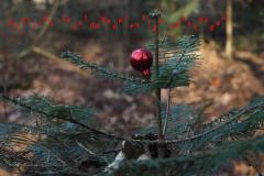 kerstboom 2020#(20201129) diversen
