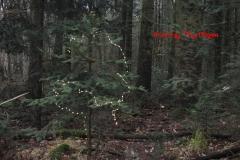 kerstboom 2020#(20201202)a diversen