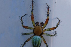 spin#(20140516) fauna-overig