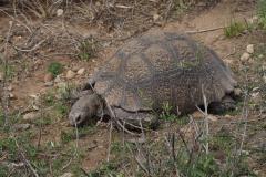 schildpad#(20161113) fauna-overig