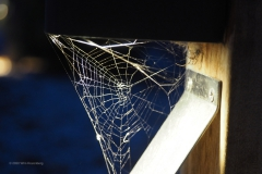 spinnenweb#05 (20200910) fauna-overig