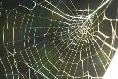 spinnenweb#06 (20200910) fauna-overig