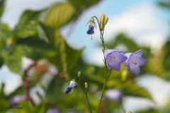 bloem#1613 (20180716)