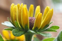 bloem#0703