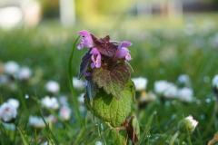 bloem#1616 (20160506)