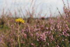 geel#(20190821) florar