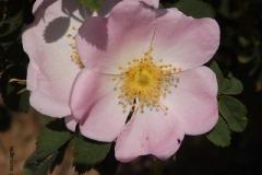 roos#(20150701) flora