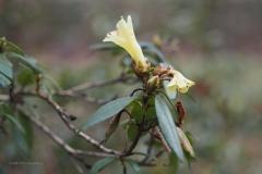 hengel#(20210103)b flora