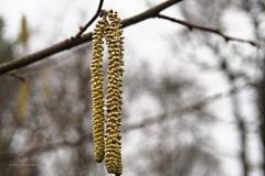 hazelaar#(20200125)a flora