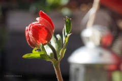 anemoon#(20210413) flora
