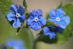 blauw# (20200415)aa flora