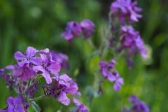 bloem#1626 (20200419)