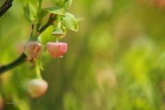 bessen#(20200425)aa flora