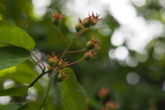 bessen#(20200503) flora