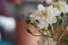 roos#(20200521) flora