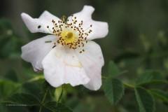 roos#(20200525) flora