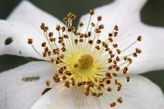roos#(20200525)a flora
