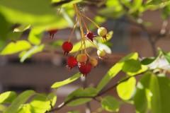 bessen#(20200528) flora