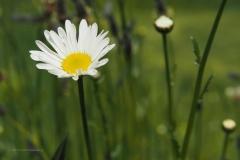 margriet#(20210529) flora