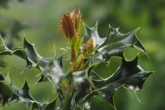 hulst#(20210529) flora