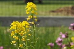 barbarakruid#(20210529) flora