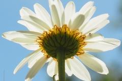 bloem#2354