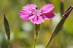 anjer#20200601) flora