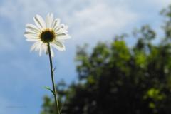 bloem#2353