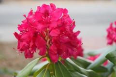 bloem#1831