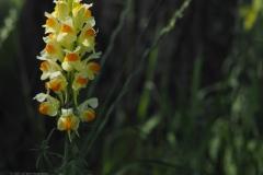 vlasbekje#(20210613) flora