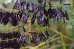 bloem#2356a (20200621) flora