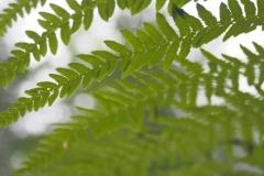 varen#(20210623)a flora