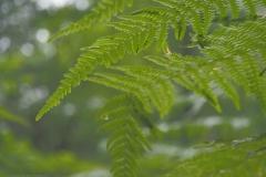 varen#(20210623)b flora