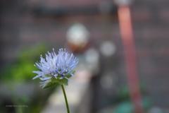 blauw#(20200626)a flora