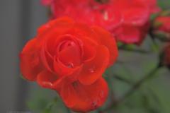 roos#20210701) flora