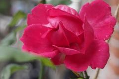 roos#(20200705) flora