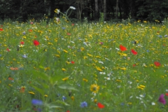 wilde bloemen#(20210713) flora