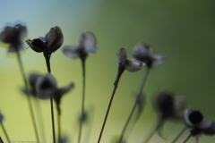 sierui#(20210717)c flora