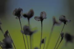 sierui#(20210717)d flora