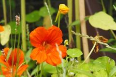 OI kers#(20200717)a flora