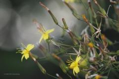 muursla#0737 (20200730) flora