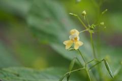 springzaad#(20210803) flora