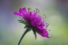 bloem#(20200805)re flora