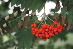 bessen#(20200814) flora